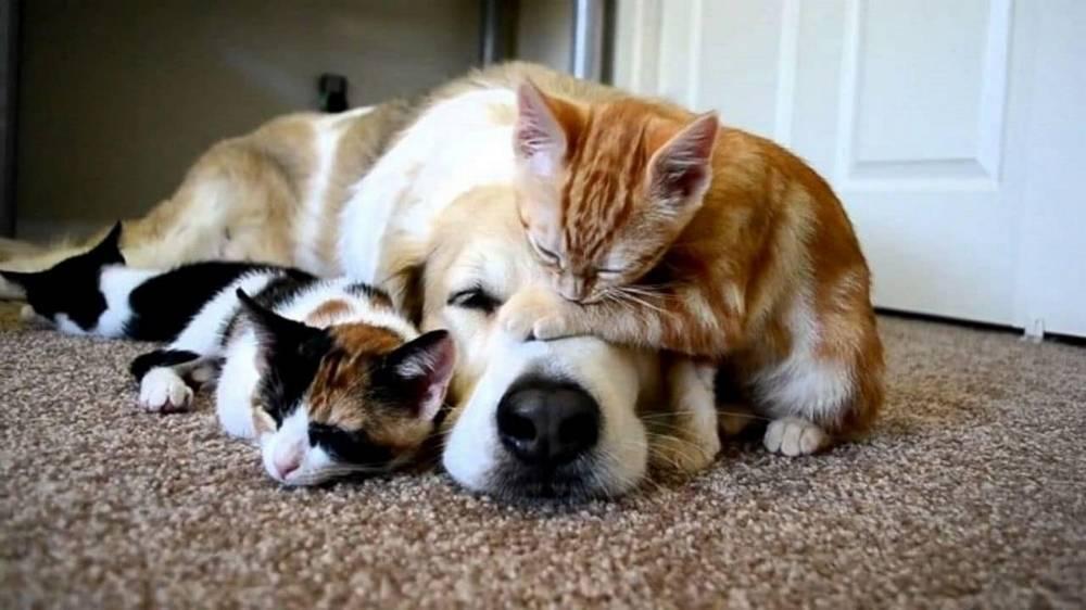 Coronavirus: cani e gatti non lo trasmettono dice l' OMS